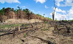 Crackdown on deforestation as climate change impacts Sri Lanka